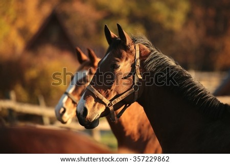 Horse in a pasture on a background of autumn trees. - stock photo