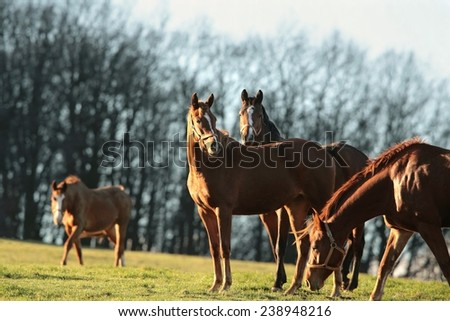 Horse in a pasture on the background of bare trees. - stock photo