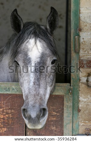 horse in a stable - stock photo