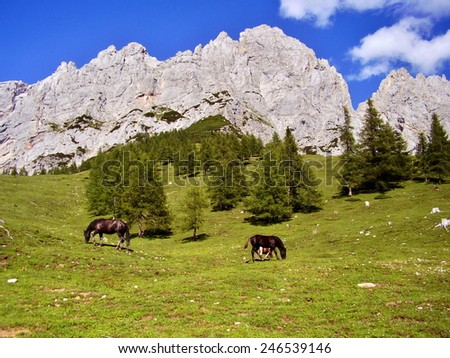 horse in alps in beautiful summer weather