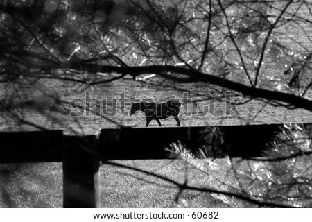 Horse in Black and White in Kentucky - stock photo