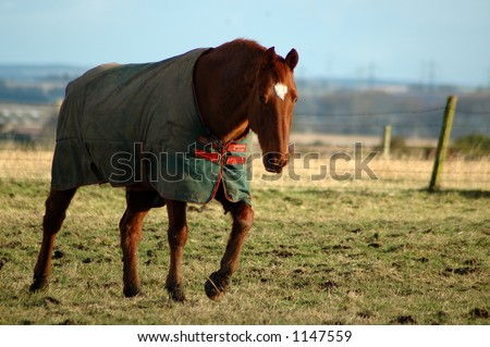 Horse in coat - stock photo