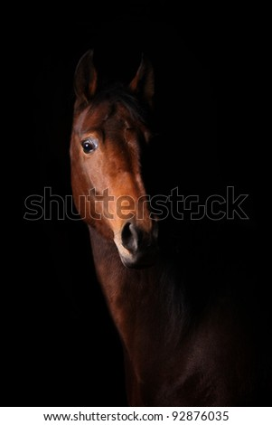 horse in dark - stock photo