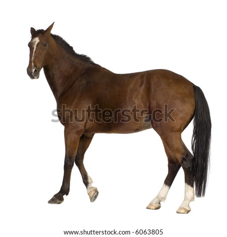horse in front of a white background