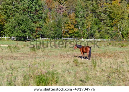 Horse in grass pasture on farm