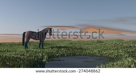 horse in grassland - stock photo