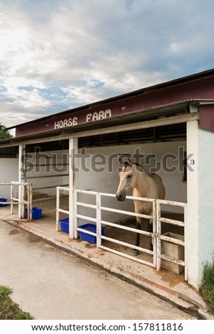 Horse in his house - stock photo