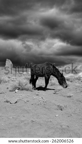 Horse in Monument Valley Arizona during storm forming - stock photo