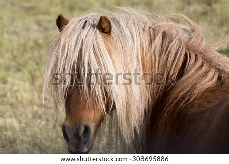 Horse in pasture close up hair in face - stock photo