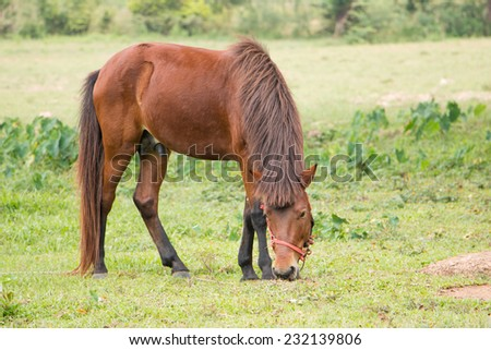 Horse in spring pasture - stock photo