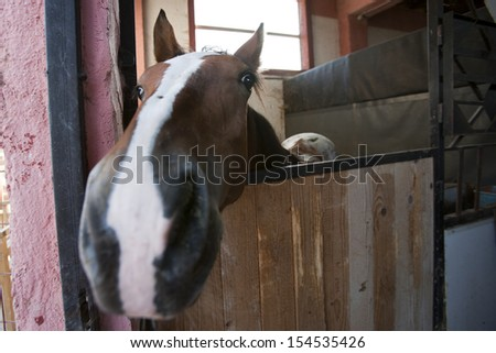 Horse in stable. Photo with shallow depth of field - stock photo