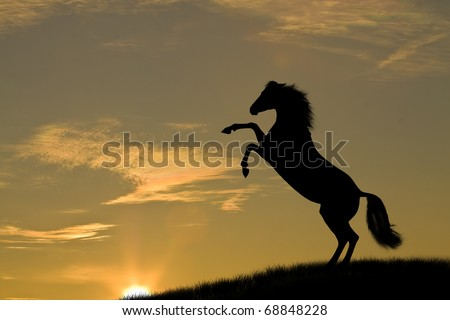 horse in sunset - stock photo