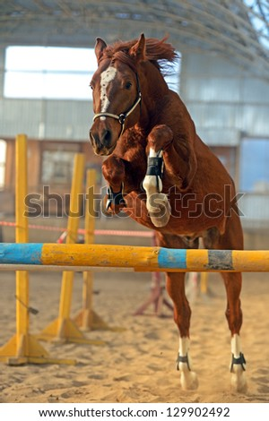 Horse in the arena overcomes obstacles - stock photo