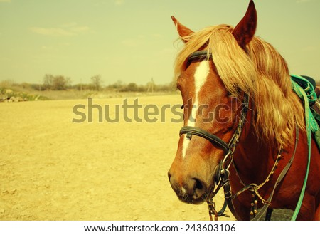 Horse in the field, with bridle and saddle - stock photo