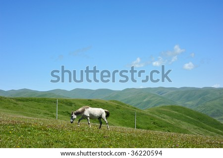 horse in the highland meadow under the sky