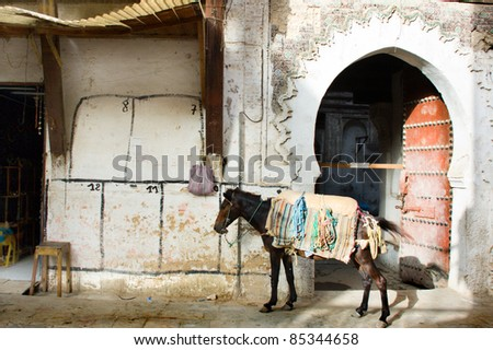 horse in the medina of Fes, Morocco - stock photo