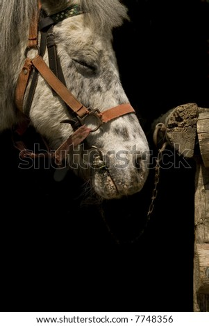 Horse in the stable - stock photo
