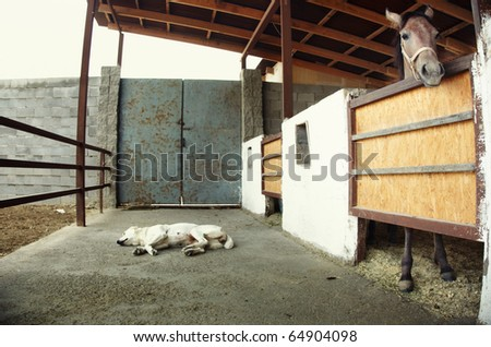 Horse in the stable and watch-dog sleeping. Natural light. Artistic colors added
