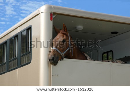 Horse in the trailer - stock photo