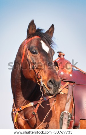 horse in western equipment - stock photo