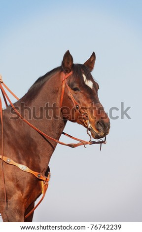 horse in western equipment