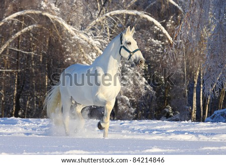 horse in winter forest - stock photo