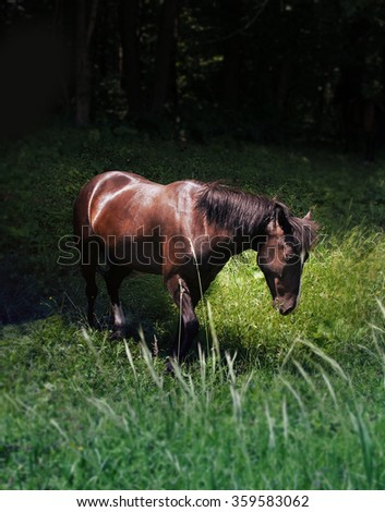 horse is grazing near a dark forest - stock photo