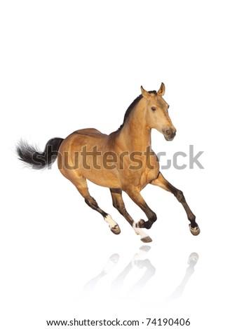 horse isolated on white - stock photo