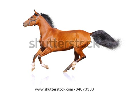 horse isolated on white - stock photo
