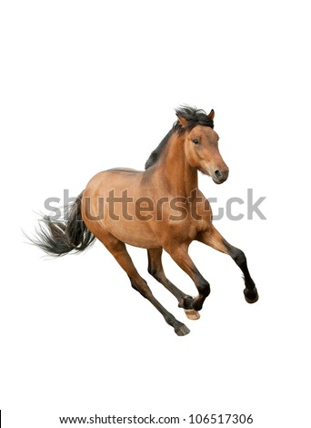 horse isolated over a white - stock photo