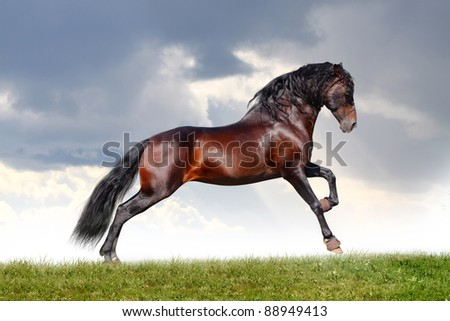 horse jumps - stock photo