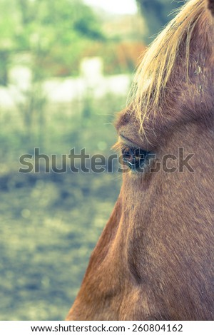 Horse left eye profile with shallow depth of field and cross processing - stock photo