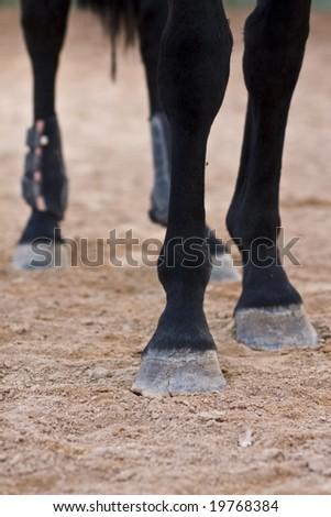 Horse legs - stock photo