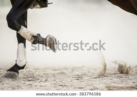 horse legs detail with copy space on the right - stock photo