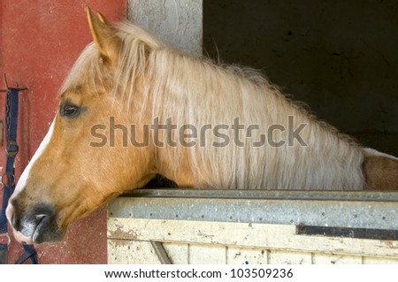 Horse looking out the fence in a horse stable