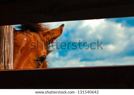 Horse Looking Through Fence