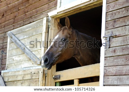horse looking through the stable window - stock photo