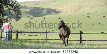 horse lunging in a paddock - stock photo