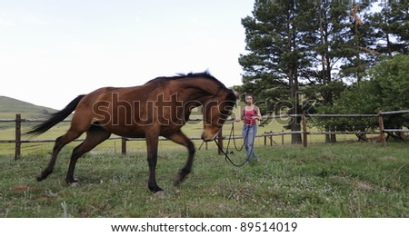 horse lunging in a paddock