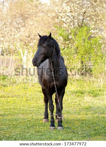 Horse of black color with the confused feet