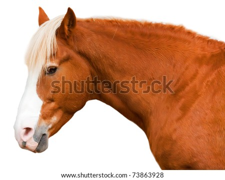 Horse of red color with sad eyes isolated on a white background - stock photo