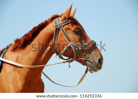 Horse on a background of blue sky - stock photo