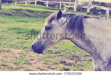 Horse on a farm, vintage retro look - stock photo