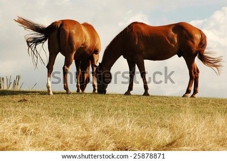 Horse on a pasture. Wind. - stock photo
