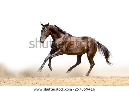 horse on a white - stock photo