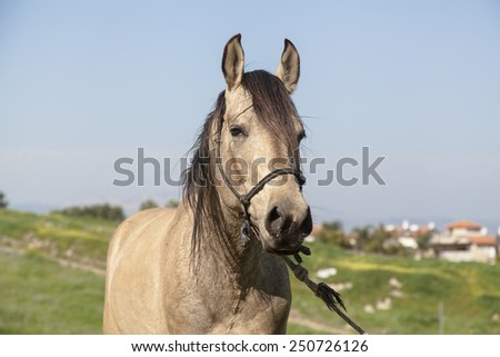 Horse on field. Portrait - stock photo