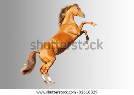 horse on gray - stock photo