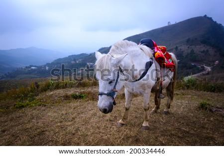 horse on mountain,doi pha tang, chiang rai, thailand - stock photo