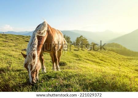 Horse on mountain pasture - stock photo