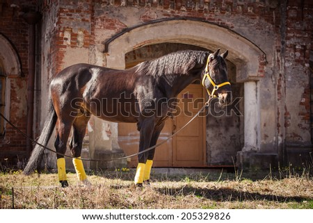 horse on nature. Portrait of a horse - stock photo